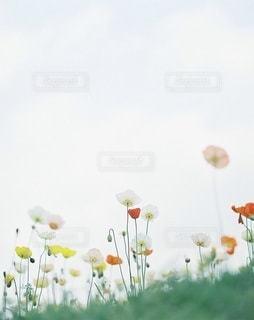 風景の写真・画像素材[7945]