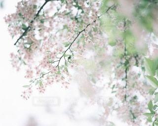 風景の写真・画像素材[7940]