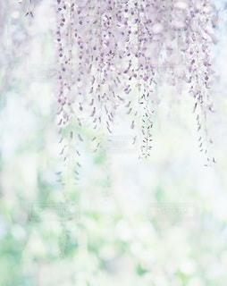 風景の写真・画像素材[7939]