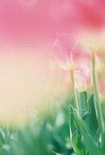 風景の写真・画像素材[7936]
