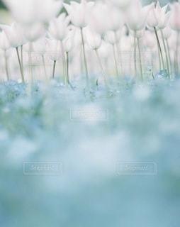 風景 - No.7933