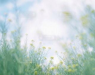 自然の写真・画像素材[7931]