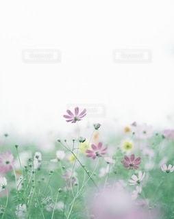 風景の写真・画像素材[7929]