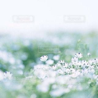 風景の写真・画像素材[7923]
