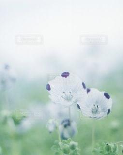 風景の写真・画像素材[7922]
