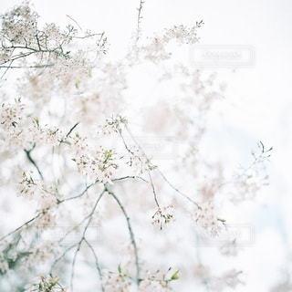 風景 - No.7911