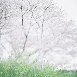 風景の写真・画像素材[7910]
