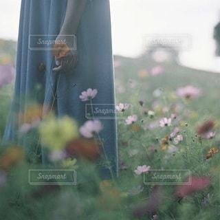 女性の写真・画像素材[7907]