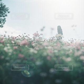女性の写真・画像素材[7886]