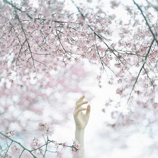 花の写真・画像素材[569188]