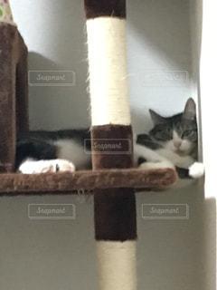 猫の写真・画像素材[327166]