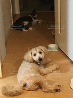 犬の写真・画像素材[327167]