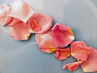 花の写真・画像素材[327245]
