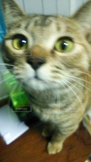 猫の写真・画像素材[327909]