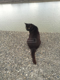 猫の写真・画像素材[328352]