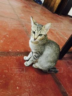 猫の写真・画像素材[327392]