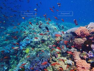 海の写真・画像素材[327397]