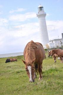 灯台と寒立馬の写真・画像素材[337368]