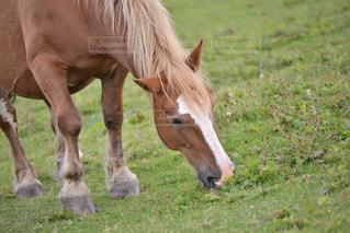 草食う寒立馬の写真・画像素材[337378]