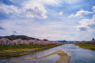 桧木内川の桜の写真・画像素材[376014]