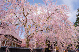 春の写真・画像素材[376017]