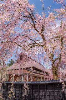 春の写真・画像素材[376018]