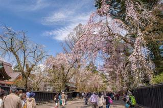 春の写真・画像素材[376021]