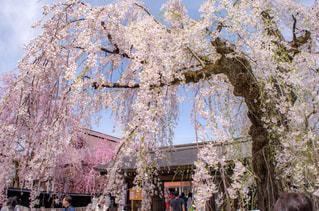 春の写真・画像素材[376022]