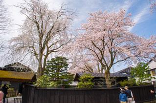 春の写真・画像素材[376033]