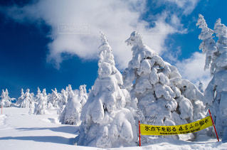 冬の写真・画像素材[594880]