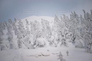 森吉山の樹氷たちの写真・画像素材[901401]