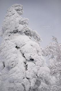 森吉山の樹氷の写真・画像素材[901402]