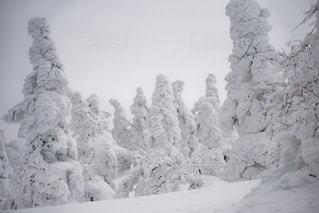 森吉山の樹氷たちの写真・画像素材[901403]