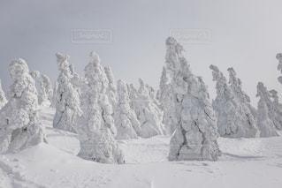 森吉山の樹氷たちの写真・画像素材[901434]