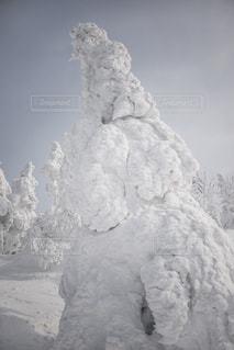 森吉山の樹氷の写真・画像素材[901437]