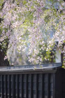 近くの花のアップの写真・画像素材[1177773]
