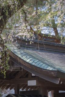屋根と葉桜の写真・画像素材[1177776]