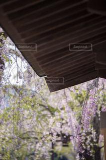 近くの花のアップの写真・画像素材[1177777]