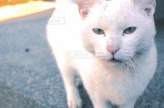 猫の写真・画像素材[345047]