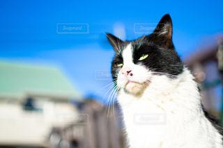 猫の写真・画像素材[345049]