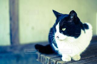 猫の写真・画像素材[345050]