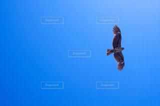 空の写真・画像素材[345684]