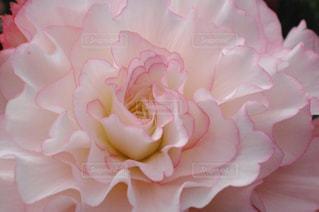 花の写真・画像素材[328280]