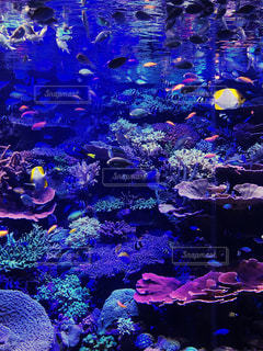 水中の楽園の写真・画像素材[1062949]