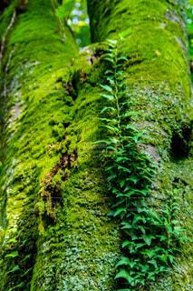 森の中の緑の植物の写真・画像素材[1073737]