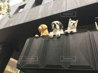 建物から見下ろすイヌのアートの写真・画像素材[1076253]