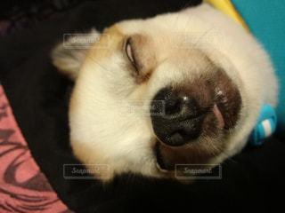 近くに犬のアップの写真・画像素材[1076809]