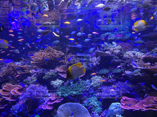 紫色の花の房の水中ビューの写真・画像素材[1077268]