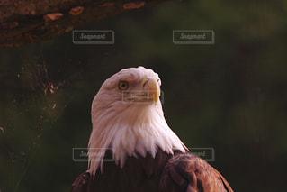 近くに鳥のアップの写真・画像素材[1079174]