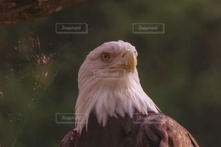 近くに鳥のアップの写真・画像素材[1079175]